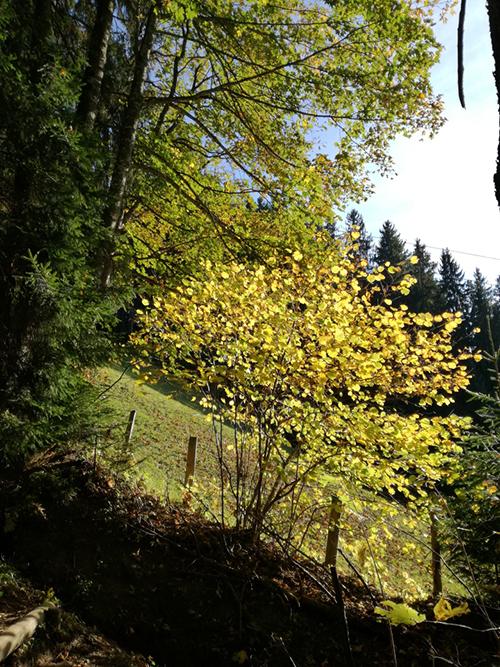 westendorf_oktober_2017_2