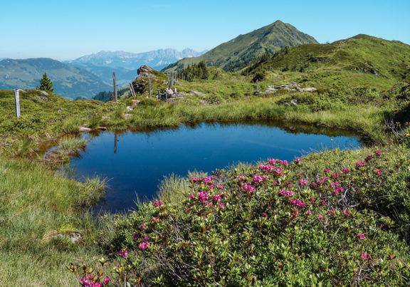 Bergsee in den Kitzbüheler Alpen mit Almrosen