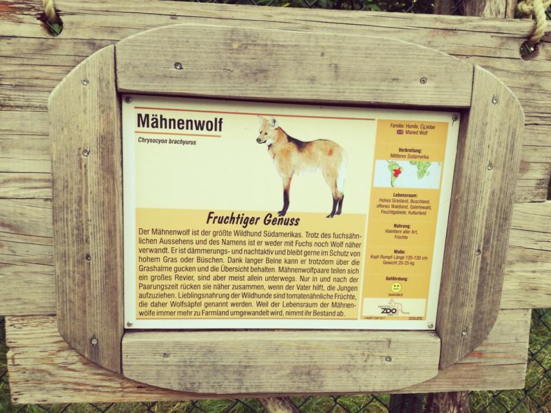 Mähnenwolf im Raritätenzoo in Ebbs