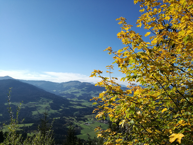 Goldener Herbst in Westendorf