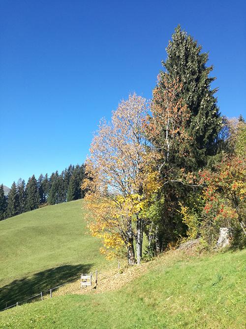 Herbst in den Kitzbüheler Alpen