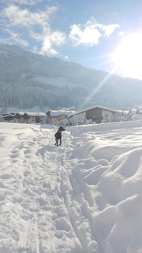 Winter in Westendorf 2019
